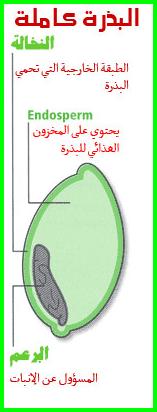 hanibalharbmag-50.15(3)